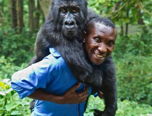 A year in the life of Virunga National Park
